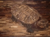 snapping-turtle